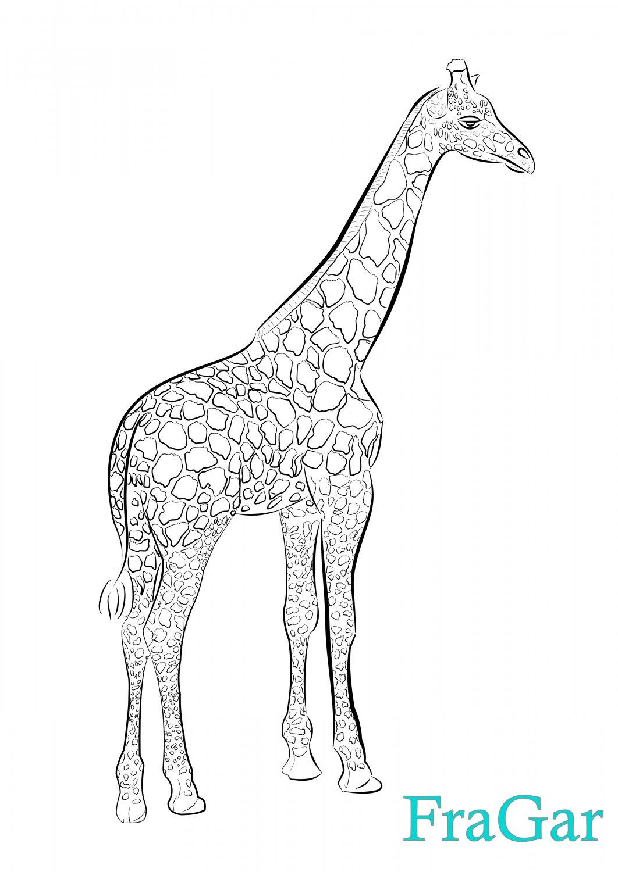 Giraff_01.jpg