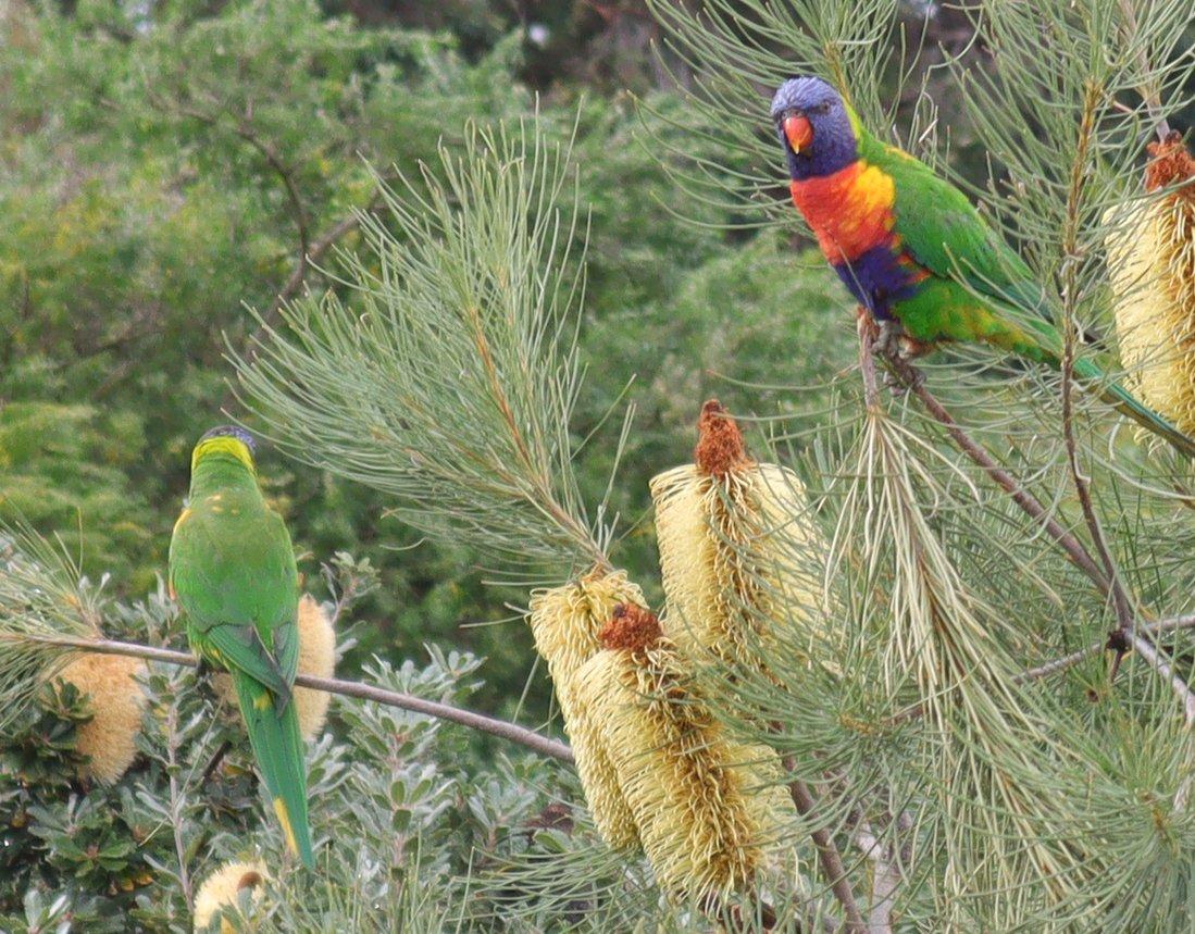birds_crop_1820.jpg