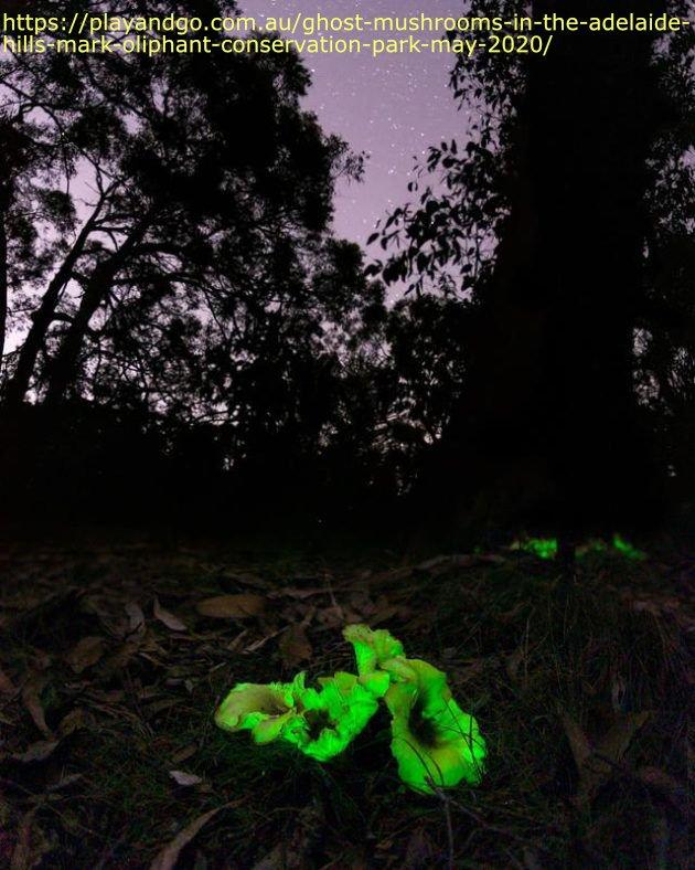 Ghost mushrooms.jpg