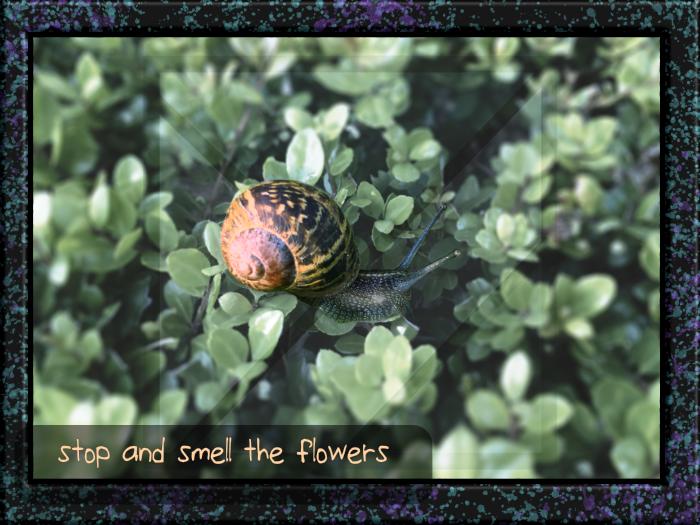 snail on shrubs.png