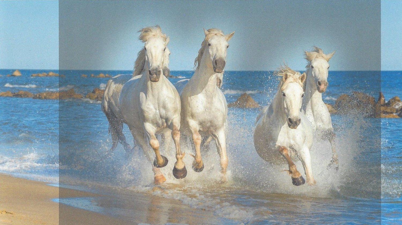 1864572345_horsesscan.thumb.jpg.051f4bb9948cab99352ad3fc2a310d2a.jpg