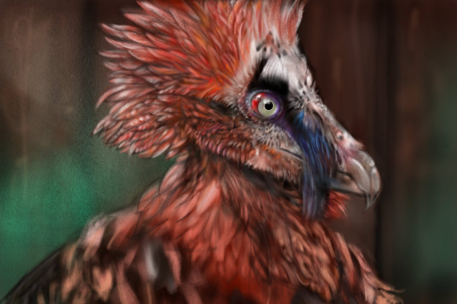 Frame seven Bone- Eating Bearded Vulture.jpg
