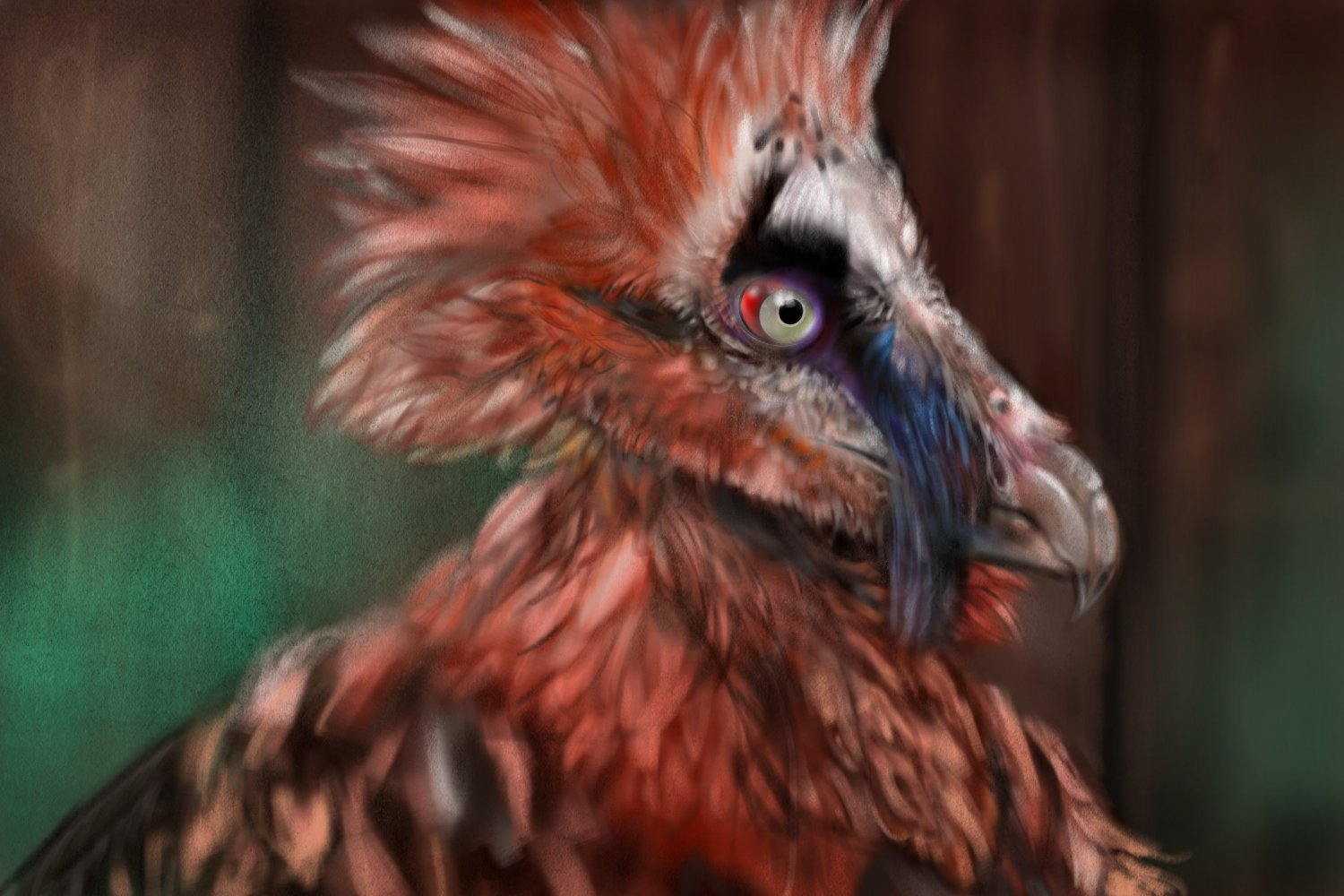 Frame six Bone- Eating Bearded Vulture.jpg