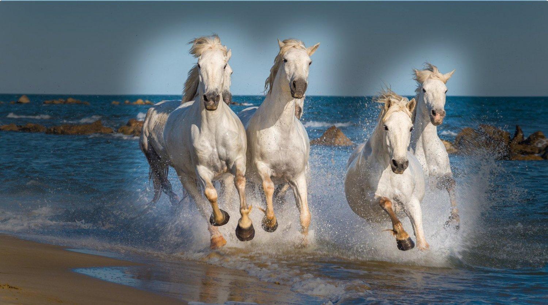 horses_with_gradient.thumb.jpg.71b765574ac3d1d7ba1983280f8962af.jpg